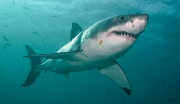 'Miss May,' 10-foot Great White Shark spotted off South Carolina Coast