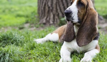 """This week, the FDA warned pet owners about the dangers of xylitol, a type of sugar alcohol that is sometimes found in<a data-cke-saved-href=""""https://www.livescience.com/39601-stevia-facts-safety.html"""" href=""""https://www.livescience.com/39601-stevia-facts-safety.html"""" target=""""_blank"""">sugar-free foods</a>."""