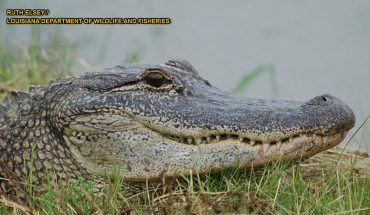 Alligator spotted in Connecticut lake prompts public safety warning