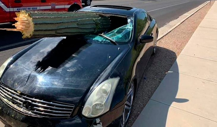 Giant cactus pierces car windshield on Arizona highway, driver miraculously unhurt