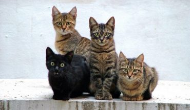 Cat allergy vaccine in the works could be game-changer for pet lovers