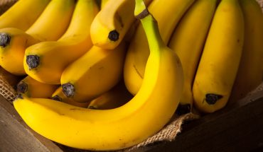 Banana-targeting fungus may cause 'apocalyptic scenario' for the fruit