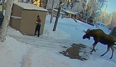 Curtis Phelps was taking out the trash when he spotted the bull moose coming straight at him.