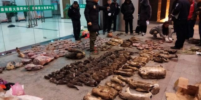 Police look at items seized from store suspected of trafficking wildlife in Guangde city in central China's Anhui Province. (Anti-Poaching Special Squad via AP)