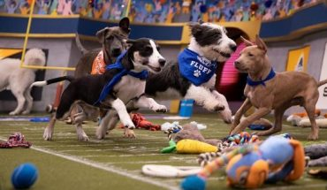 Puppies playing on the field for Puppy Bowl XVI.